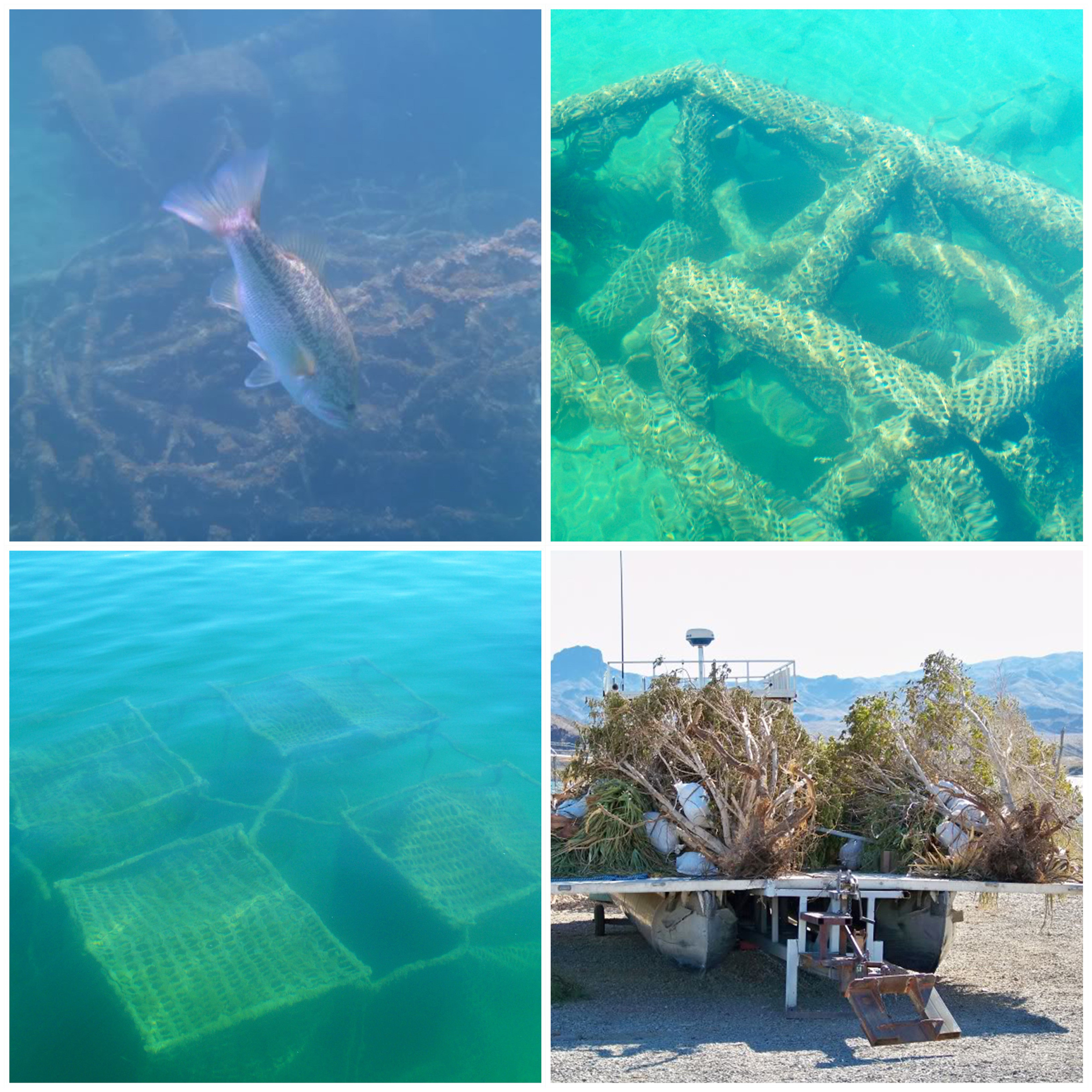Manmade and natural habitat is placed throughout Havasu.