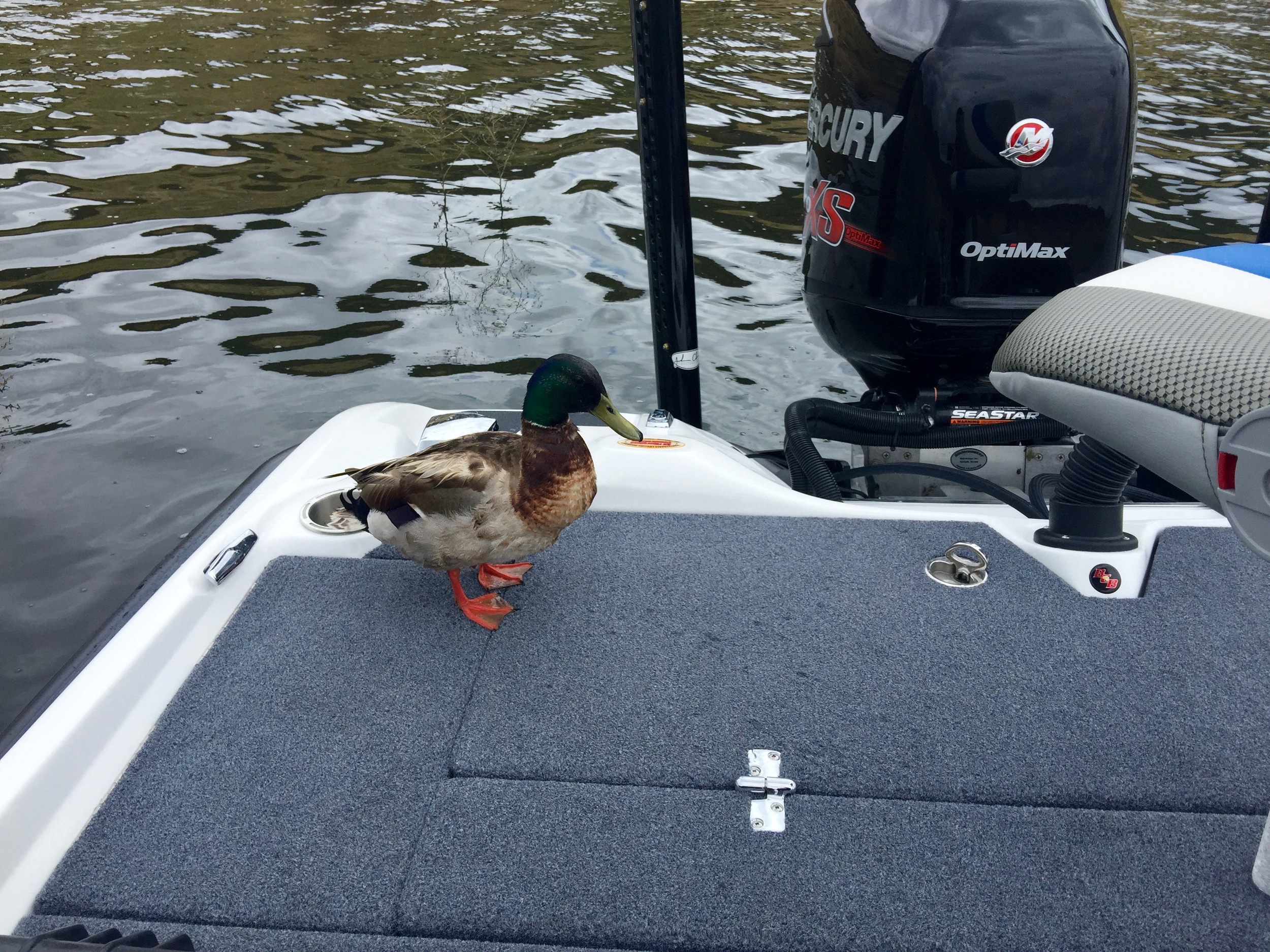 Milferd The Mallard Needed A Little Break And Wanted To Check Out The New BassCat Caracal!