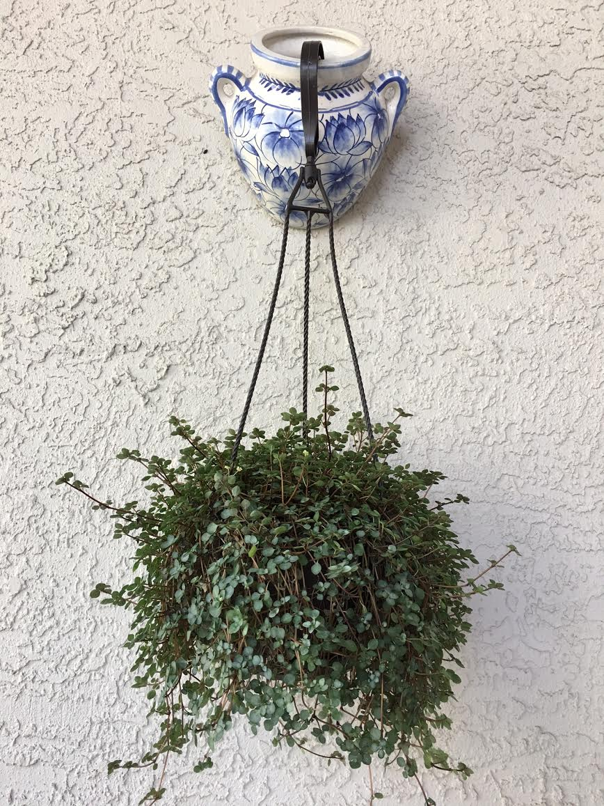dangling plant with wall pot.jpg