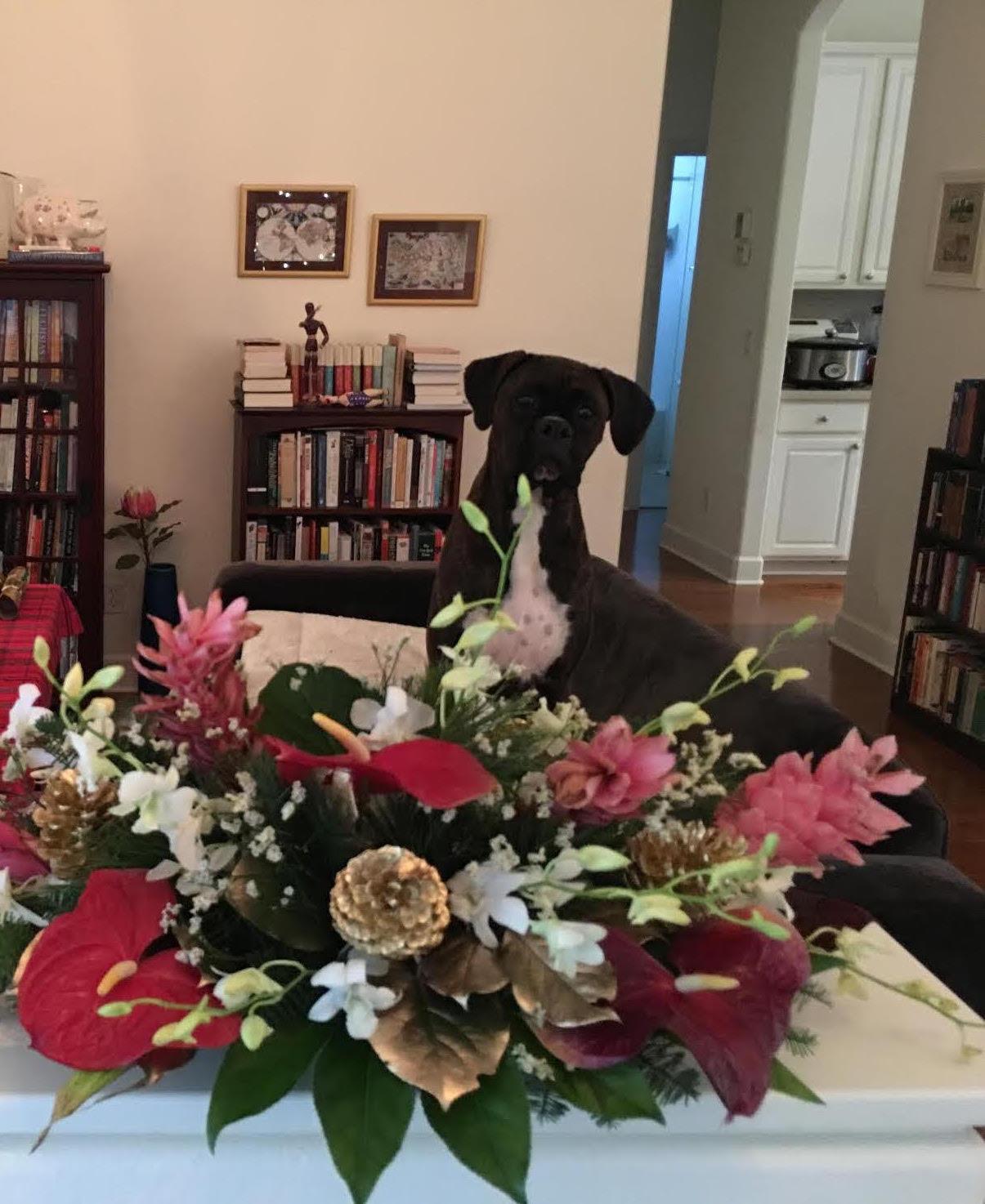 Betsy Christmas Day 2018.jpg