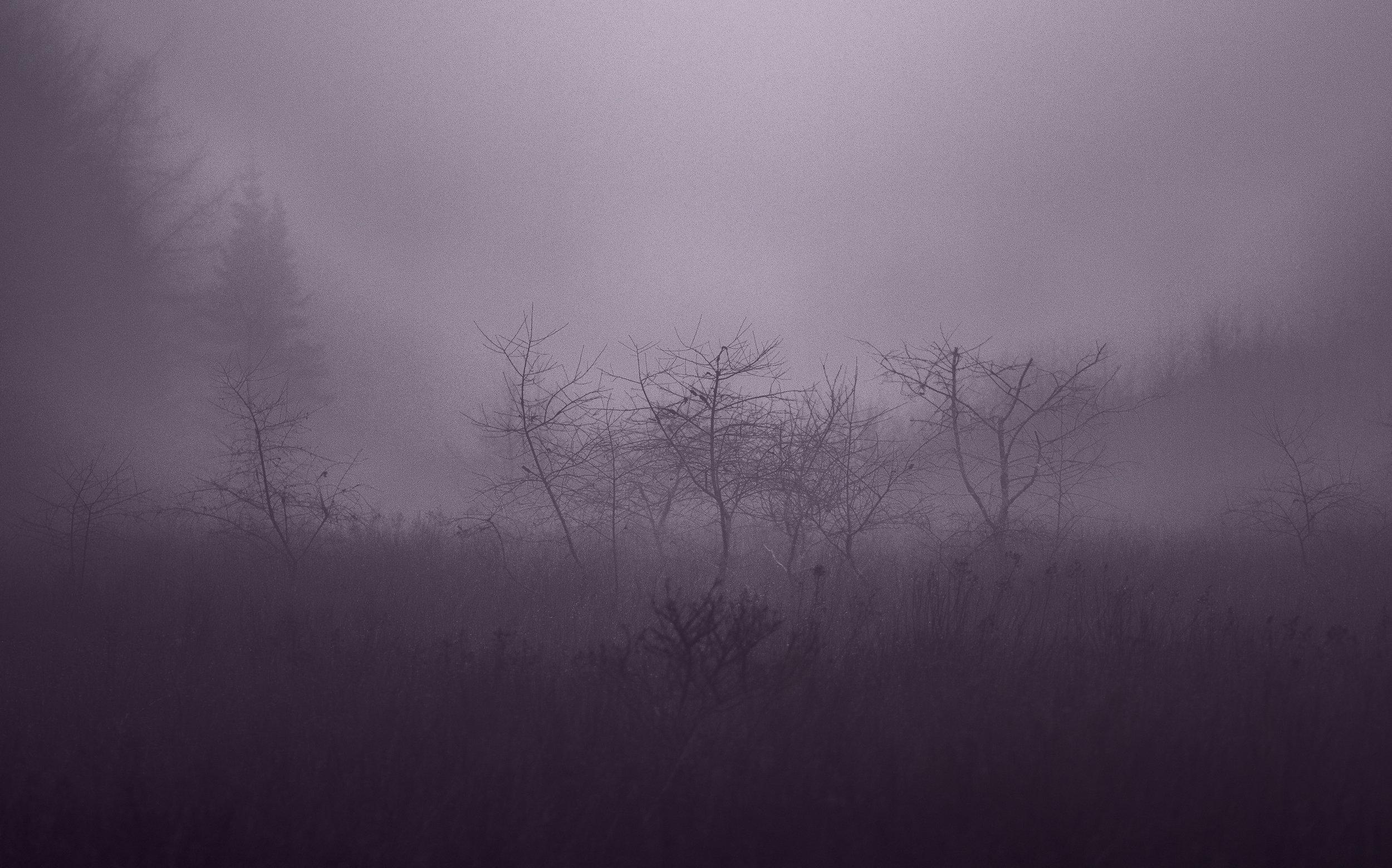 kathleenwoods.jpg
