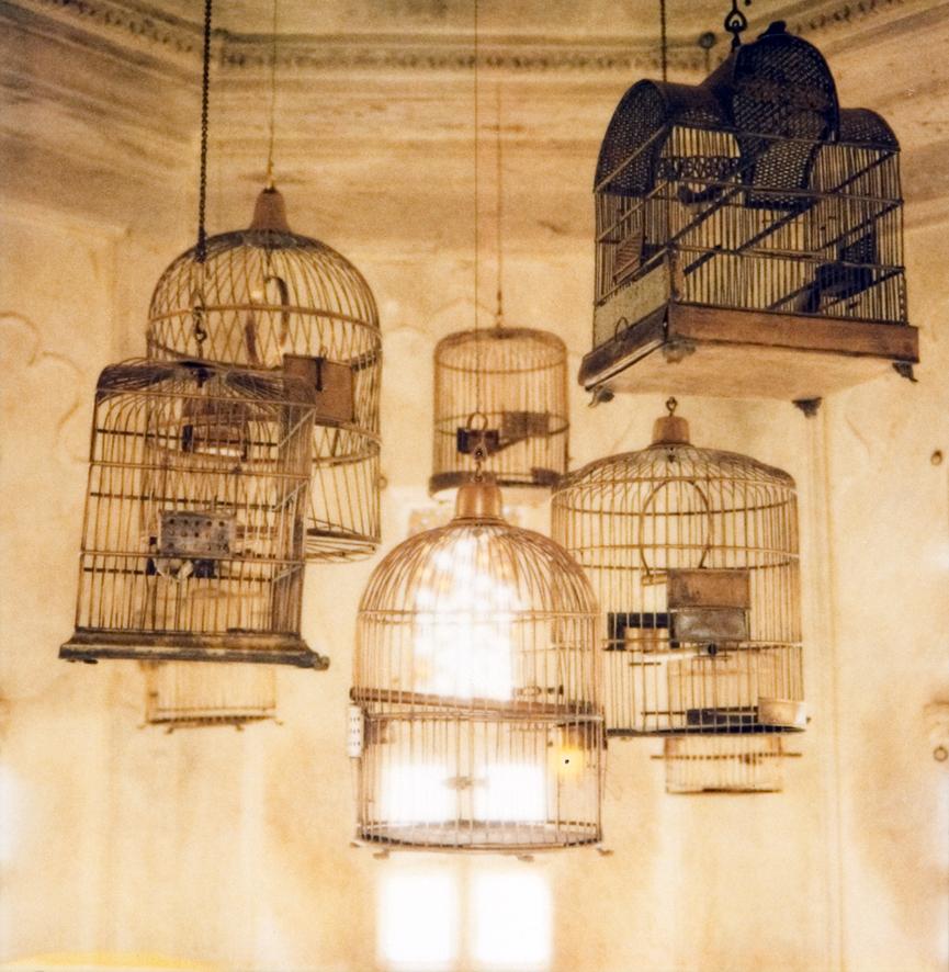birdcages_MG_0045nf.jpg