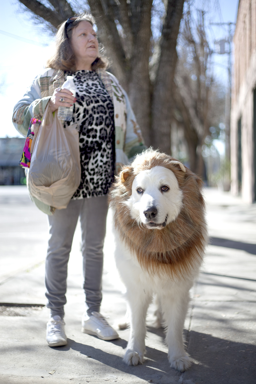 Faye Pritchett and her dog Thor, dressed up as a lion, stop to chat with friends in Monticello, Florida.