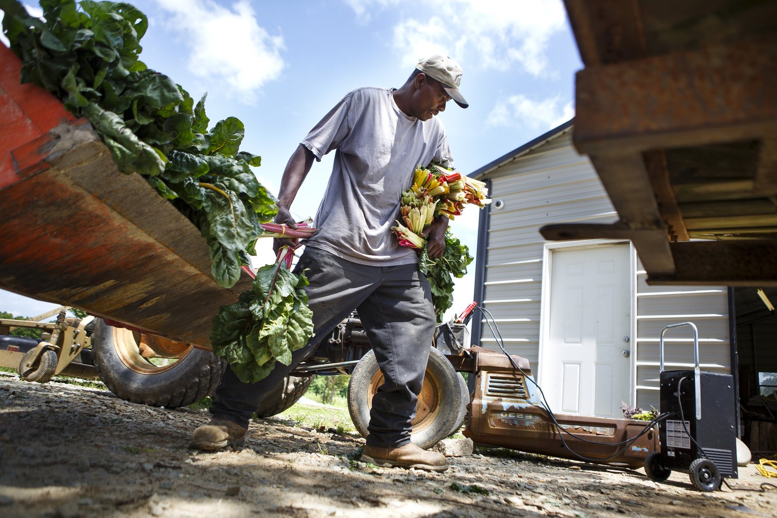 In 1999 following the largest ever civil rights settlement in the history of the United States, minority farmers in North Carolina believed that perhaps their situations would change. The USDA had acknowledged discriminatory practices when it came to lending for minority farmers. Now perhaps they would stop losing their land at rates far faster than white farmers. Perhaps they would have equal access to farm loans.   The black farmers of North Carolina were some of the first to desegregate their schools. They had been targeted by the Ku Klux Klan as crosses were burned in their front yards. They were pulled off school buses and beaten. Their parents were sharecroppers. The farmers of today grew up picking cotton and growing tobacco.  Now twenty years after Timothy Pigford filed his historic lawsuit, many black farmers in North Carolina continue to struggle to find innovative ways to stay on their land. Finding niche markets such as organic farming has allowed many to make ends meet. But without access to capital and resources, their hopes that farming will be a viable career for their children often seems like a distant dream.
