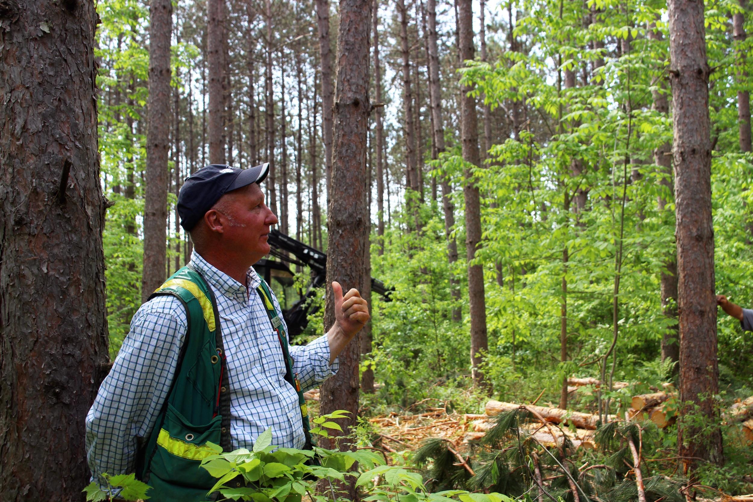Forestry Day 3.jpg