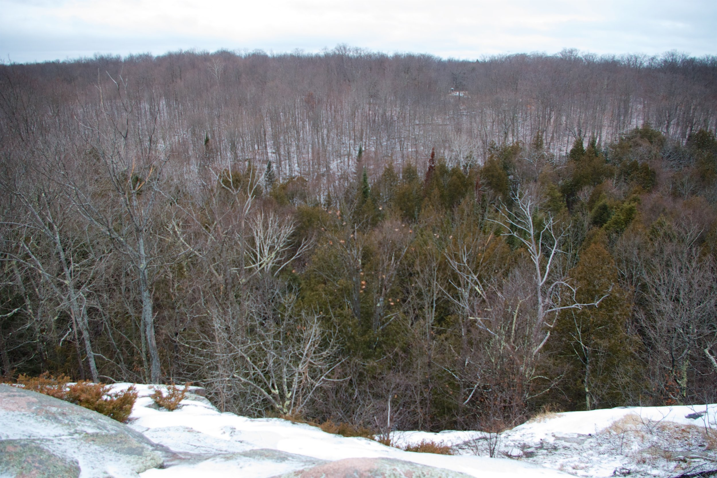 Ancient woodland, Madoc Township