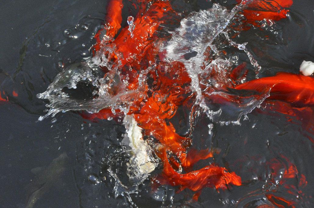 fish abstract reduced.jpg