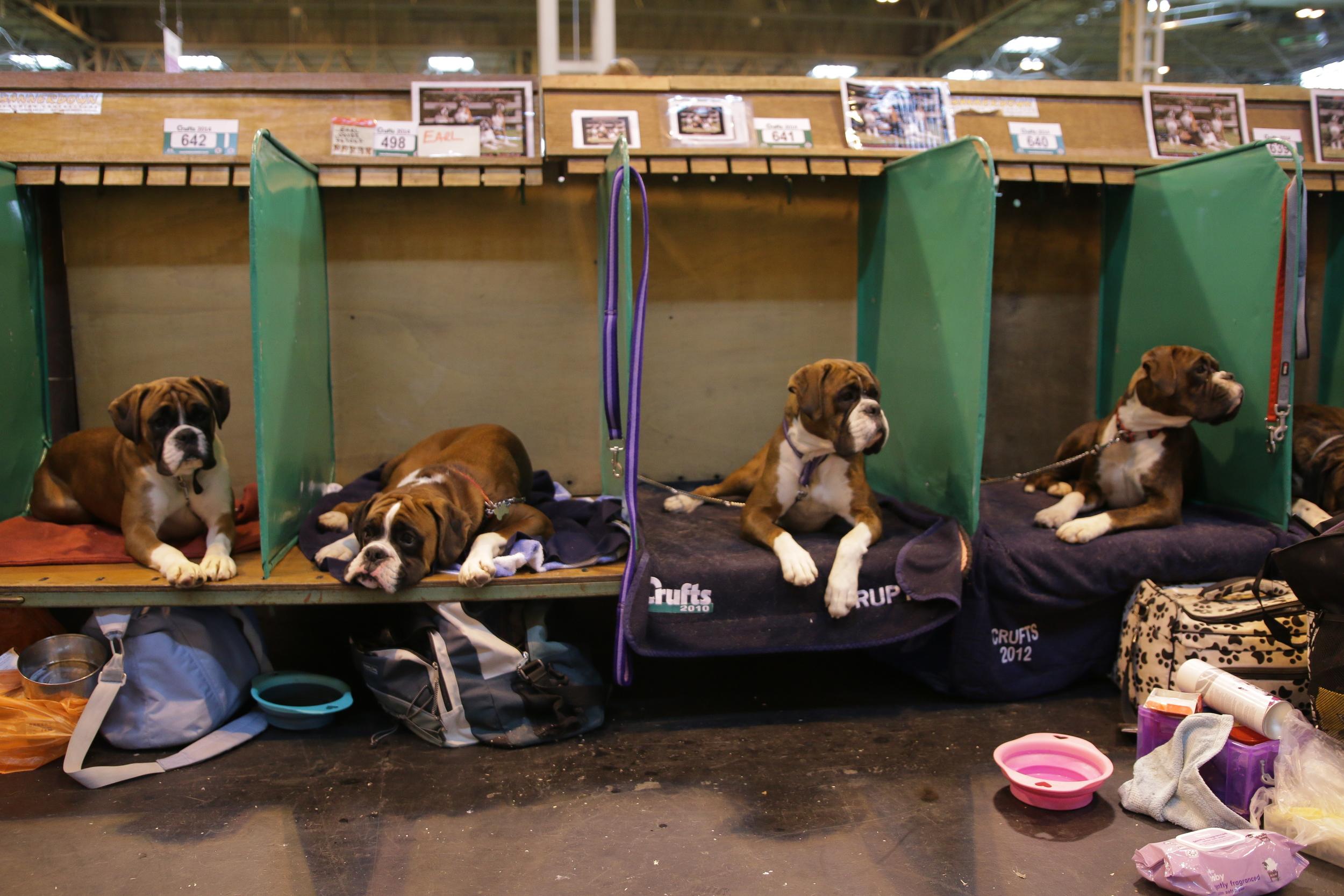 Boxers waiting