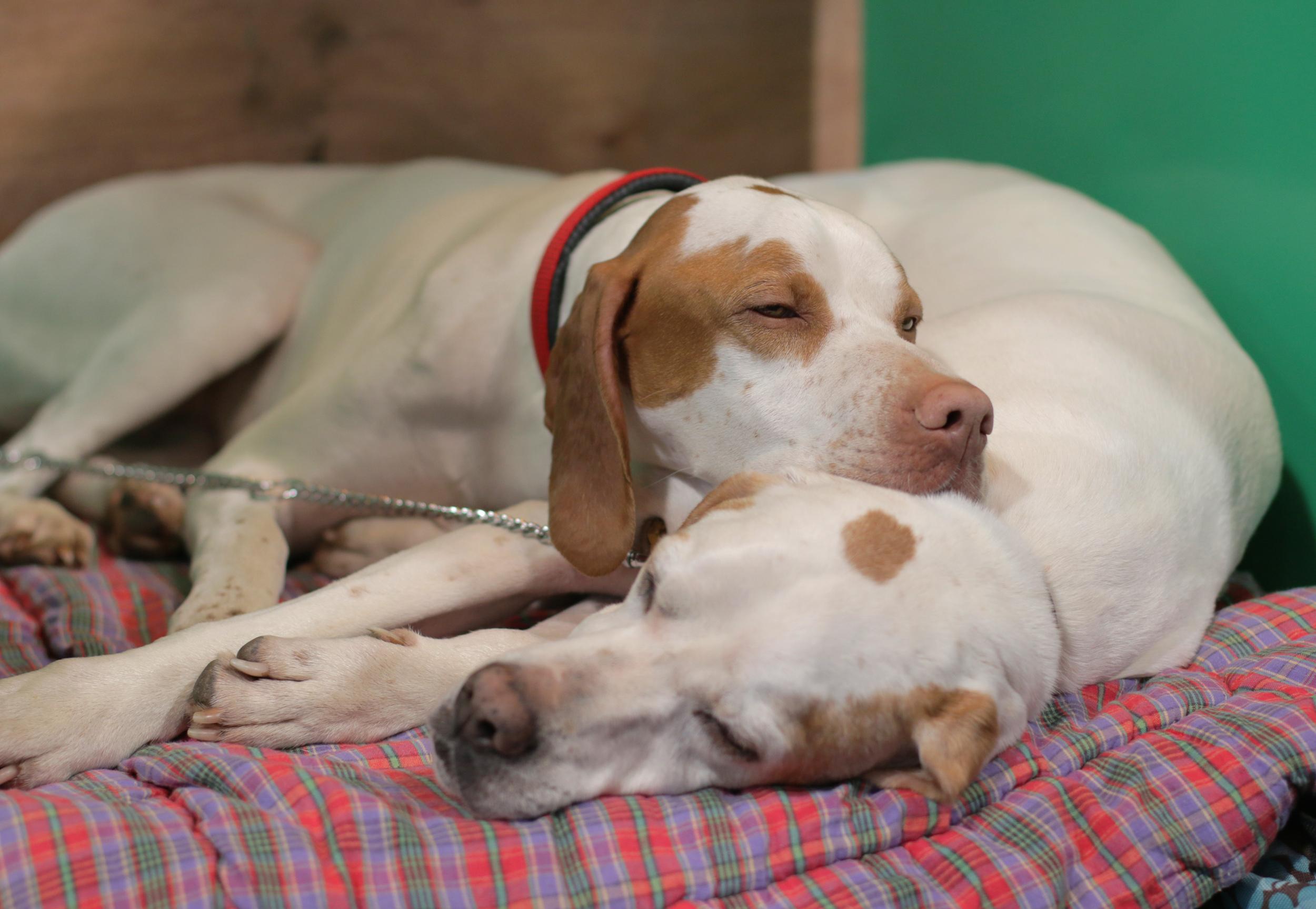 Sleeping pointers