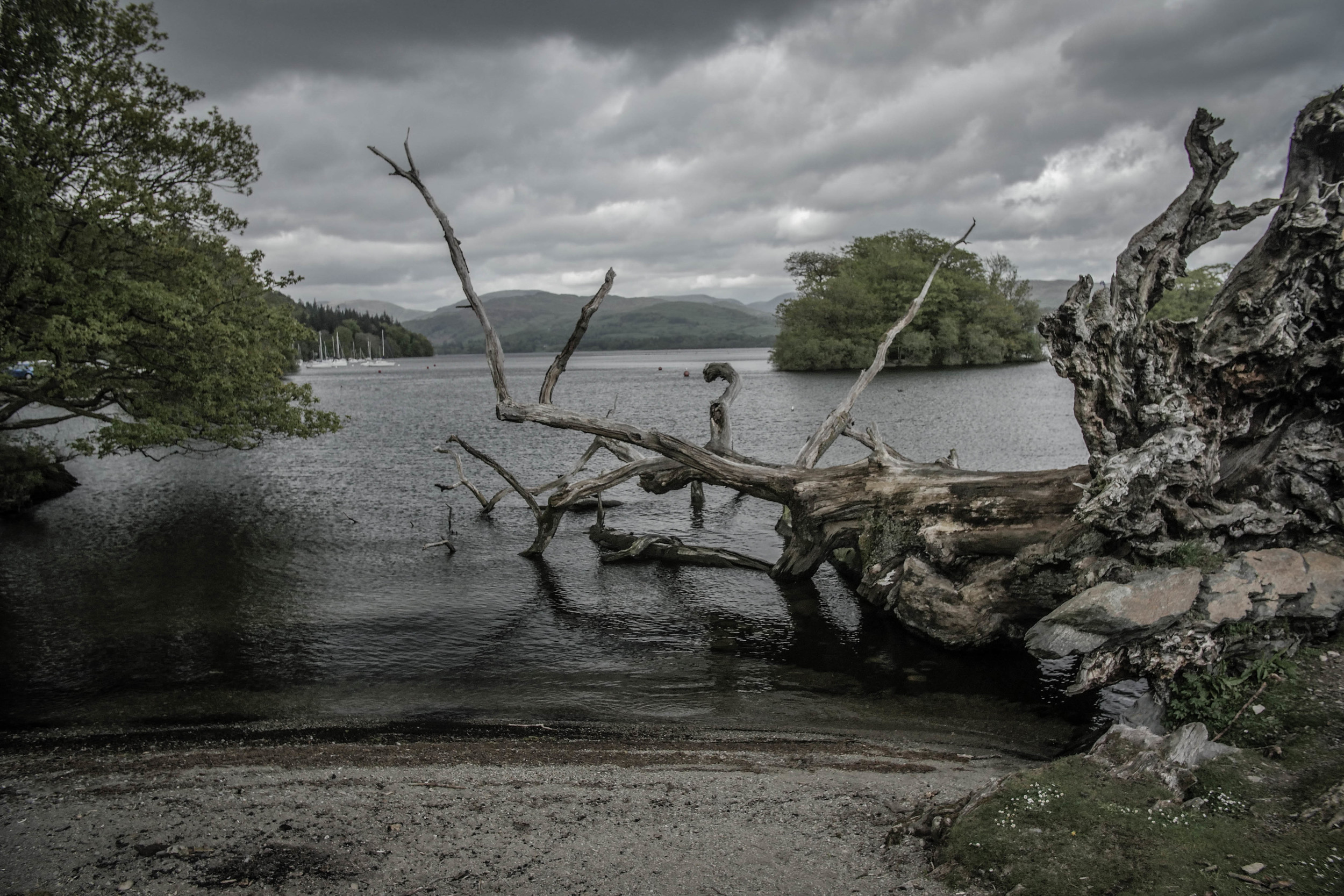 Lots of fallen trees following a storm. This big one ended up diving intothe lake - agloomy yetcool atmosphere.
