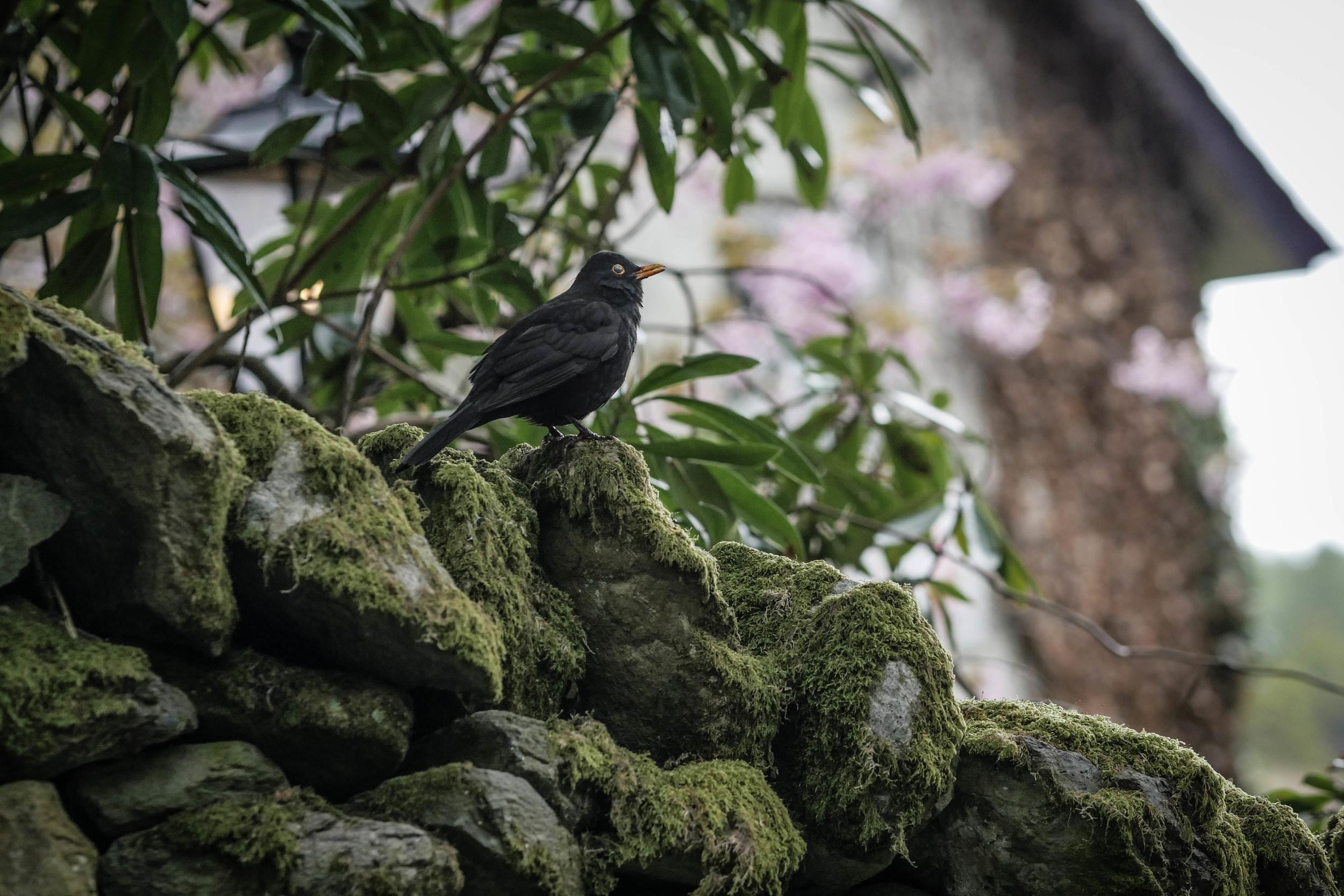 bird-stone-wall-england-north