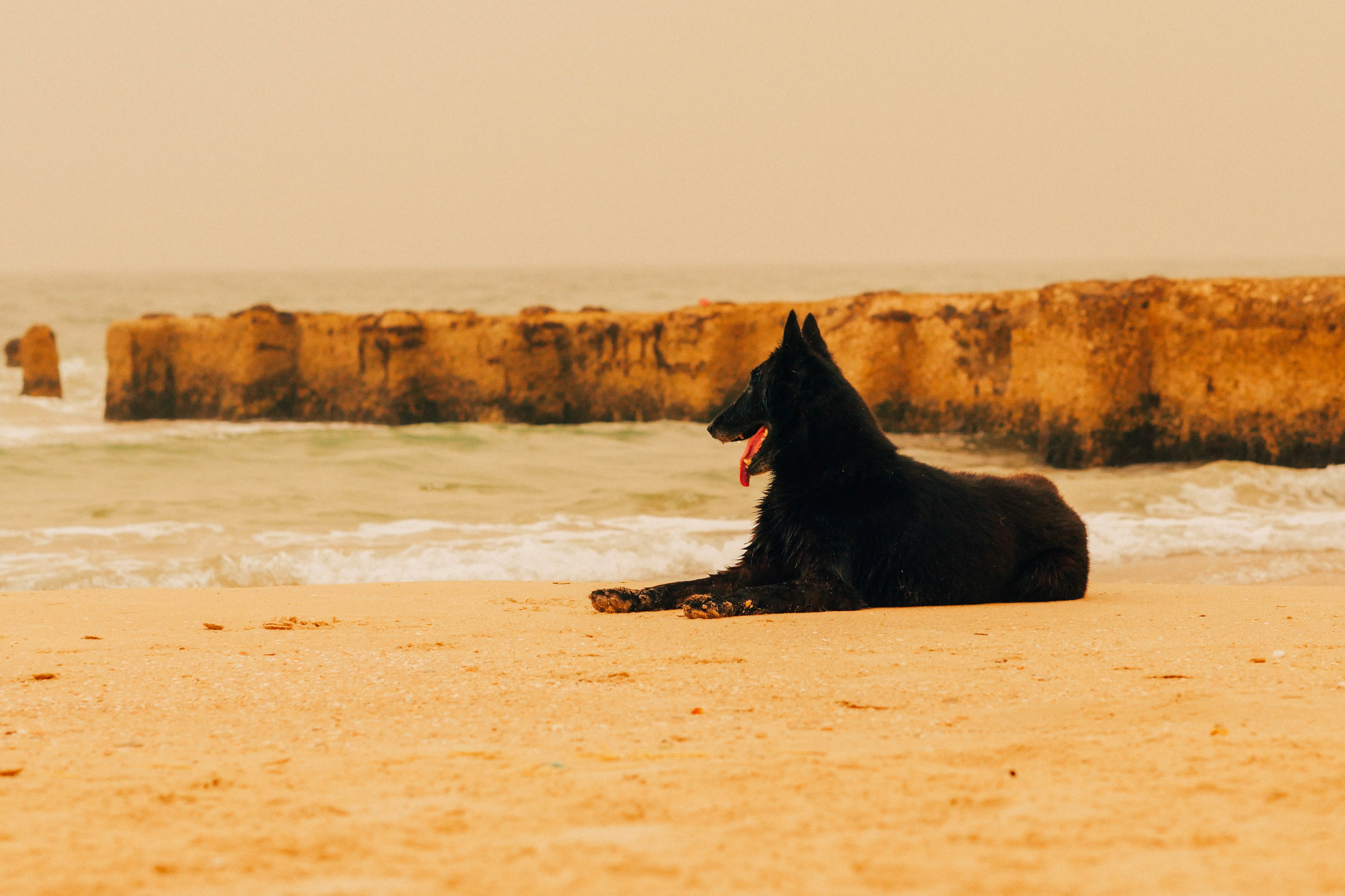Belgian Shepherd / Cooling and chilling