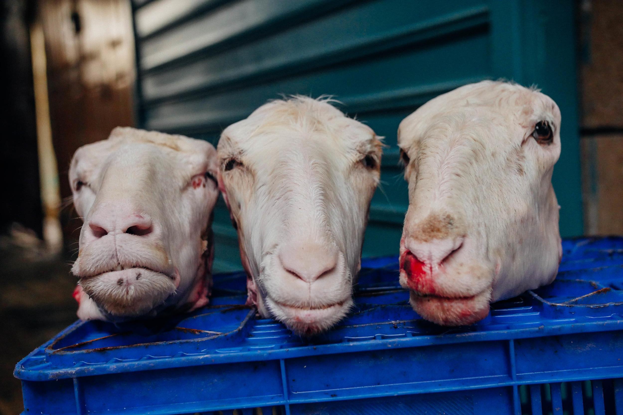 Goat heads: the local butcher in Akko