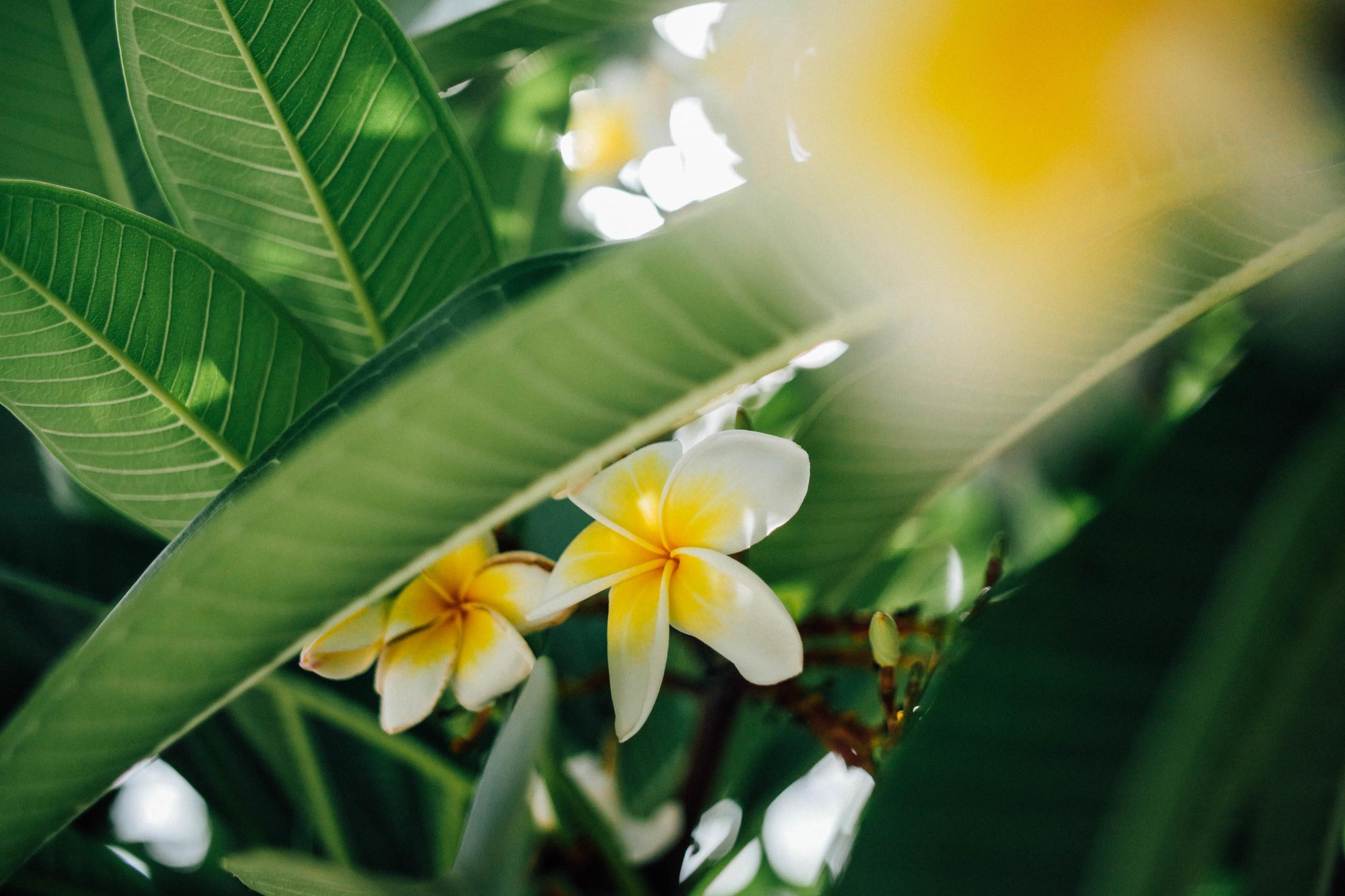 Flowers of Bahai