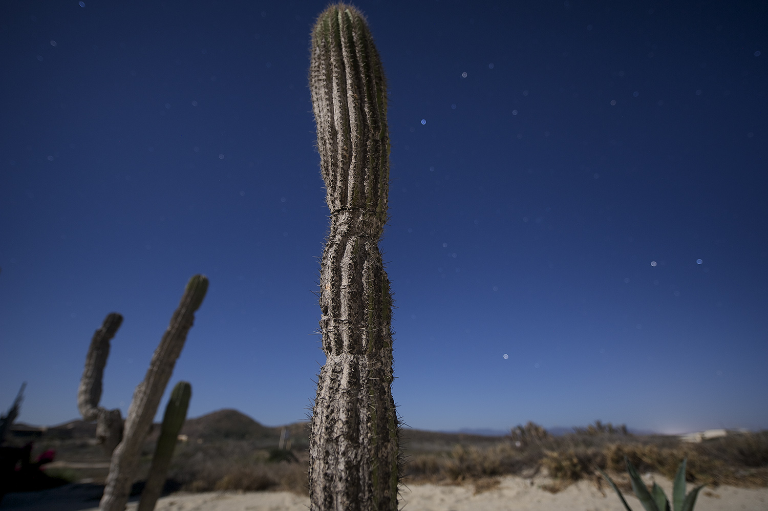 Midnight Cactus & Full Moon Light
