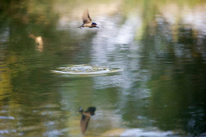 Swallow & Rise Form. Silver Creek, Idaho.