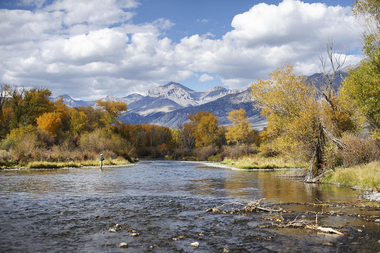 Fall Color. Big Lost River, Idaho.