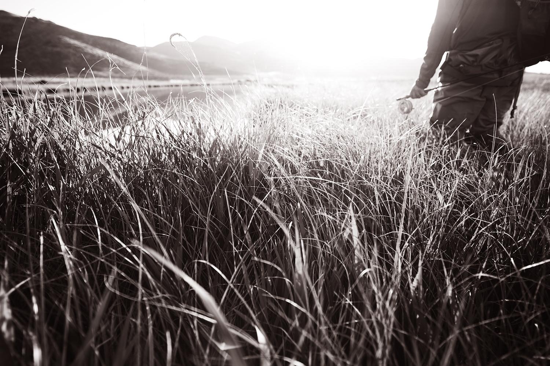 Tall grass and first light.