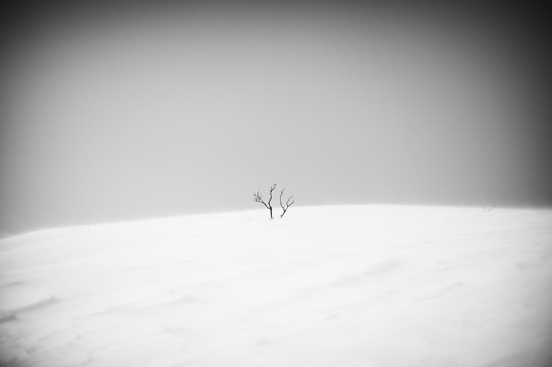 Scarred Sage & Snow 1