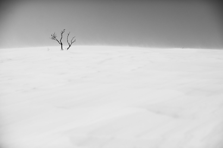 Scarred Sage & Snow 2