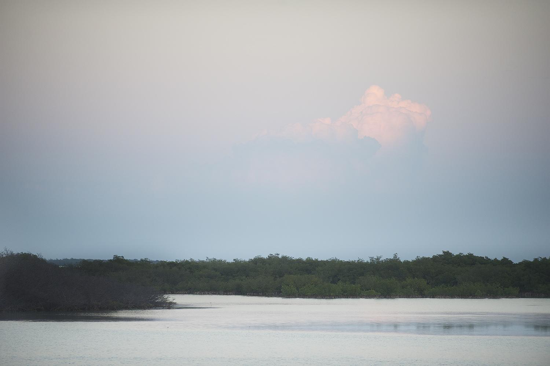 View Through A Mangrove Cut