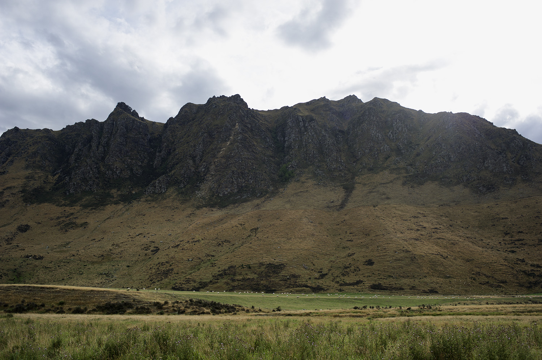 NZ Sheep & Hill.jpg