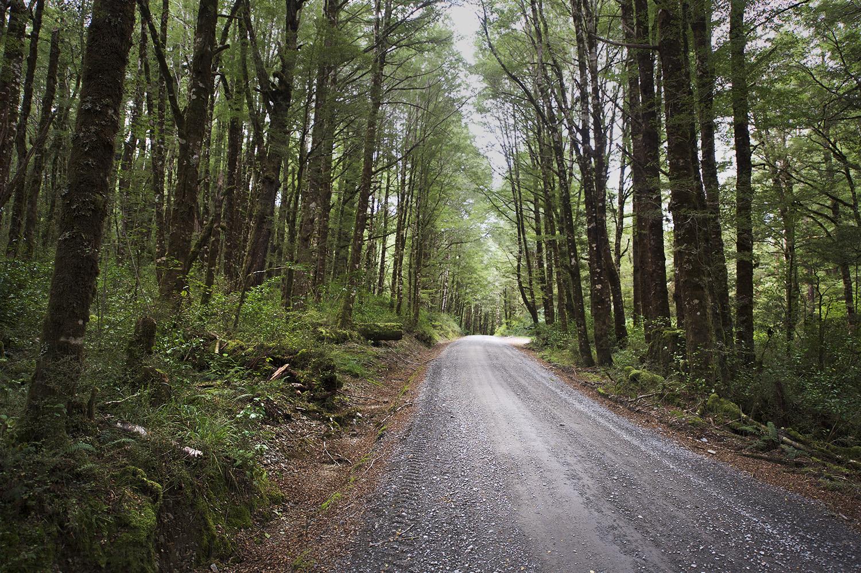 NZ Dirt Road Trees Color.jpg