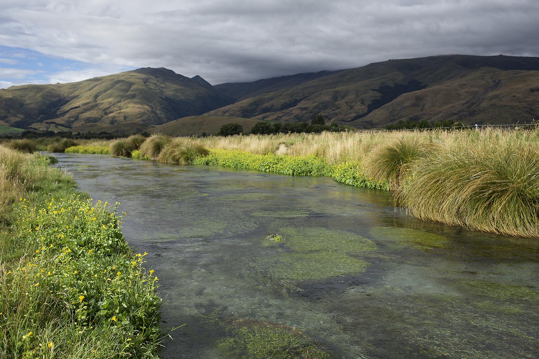 NZ Spring Creek Flowers & Water.jpg