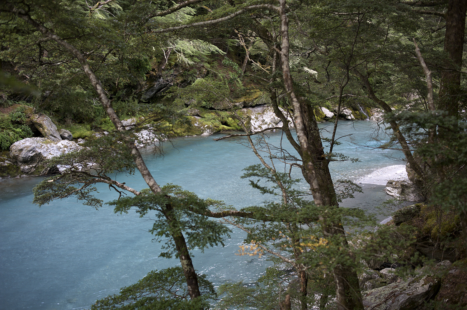 NZ Turquoise Water Forest.jpg