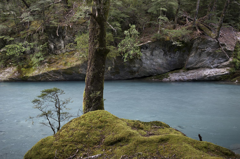NZ Turquoise River & Tree.jpg