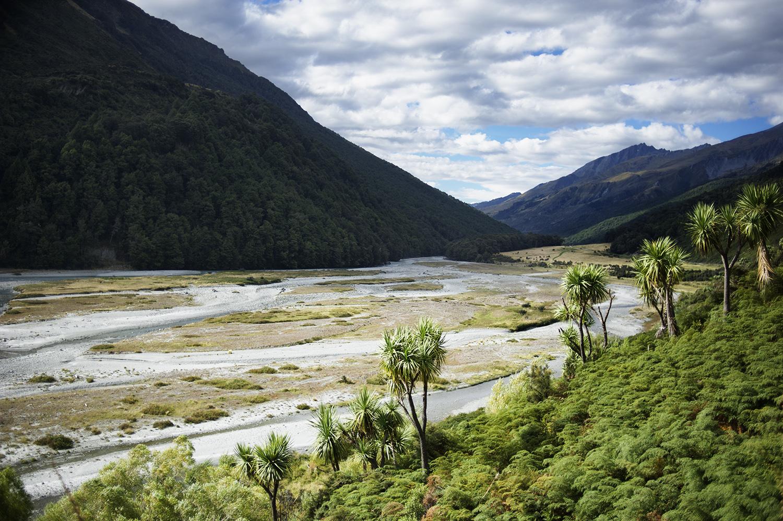 NZ Cabbage Trees & River.jpg