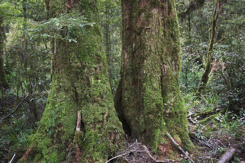 NZ Two Trees.jpg
