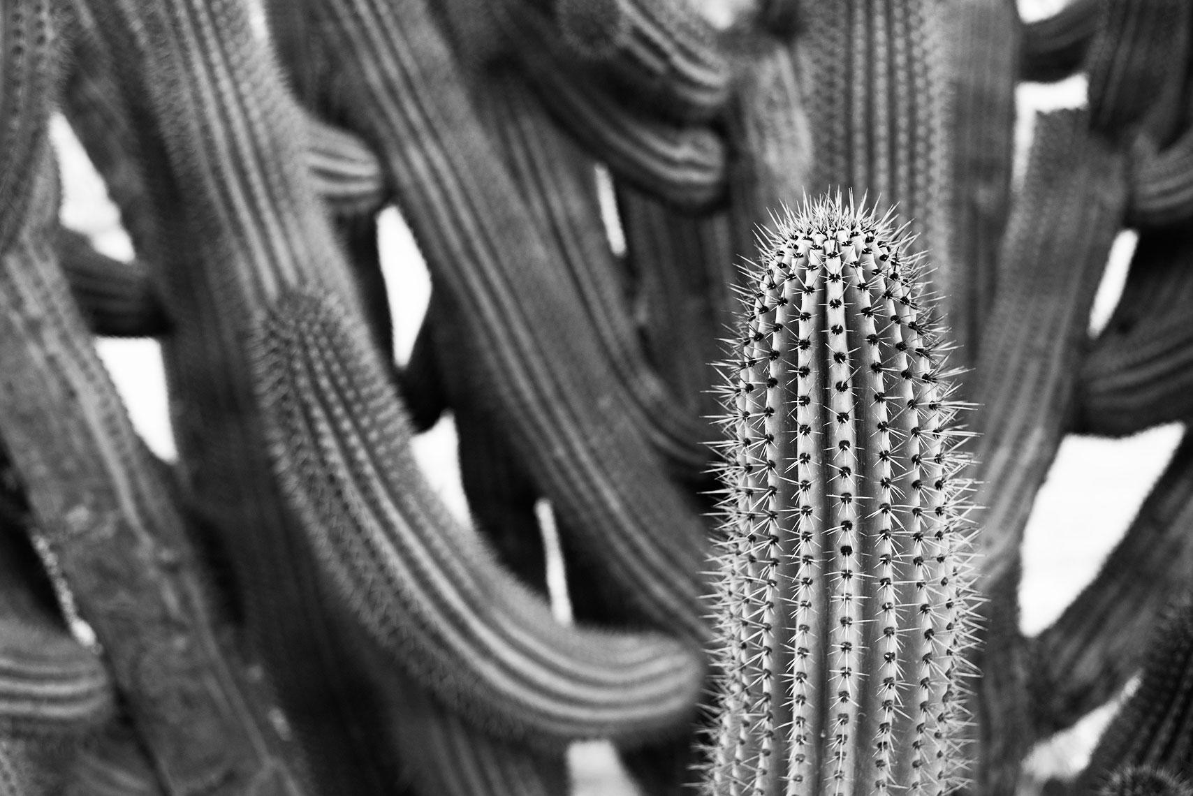 baja-cactus-bw.jpg