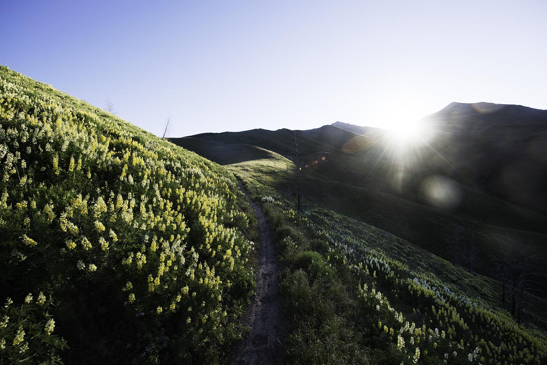 sun-valley-mountain-bike-trail-lupine.jpeg