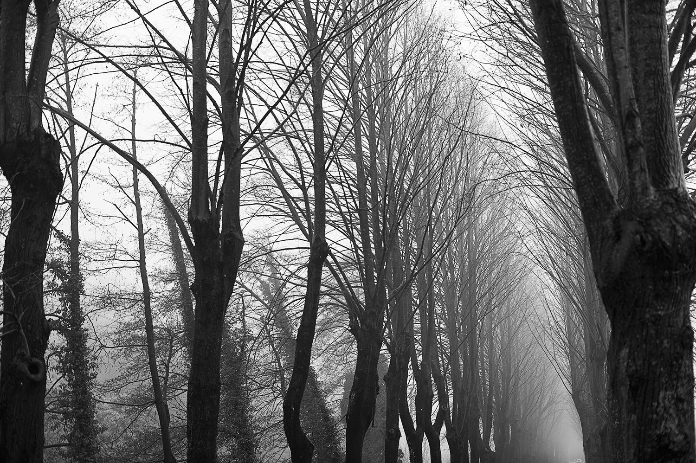 row of trees tuscany.jpg