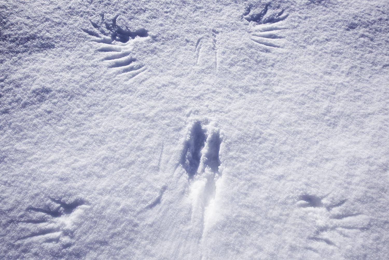 wings snow 1.JPG