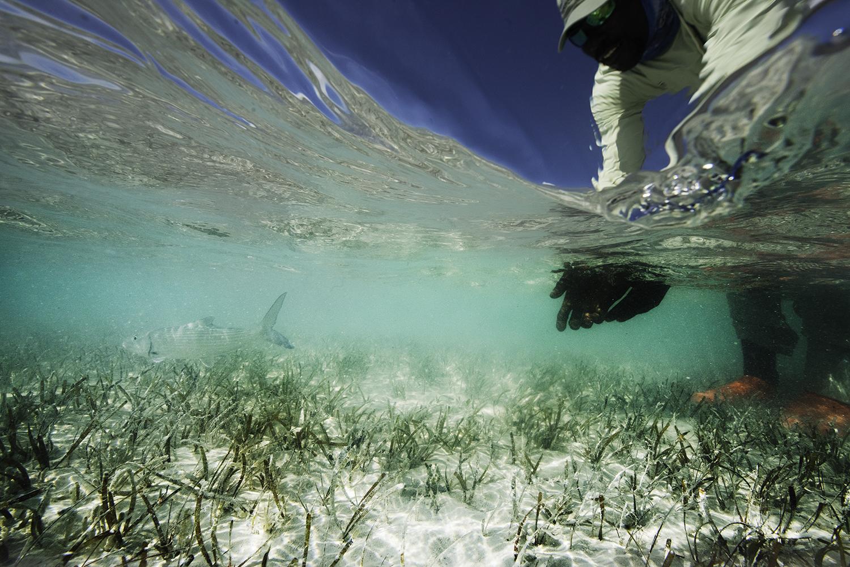 bahamas bonefish.jpg