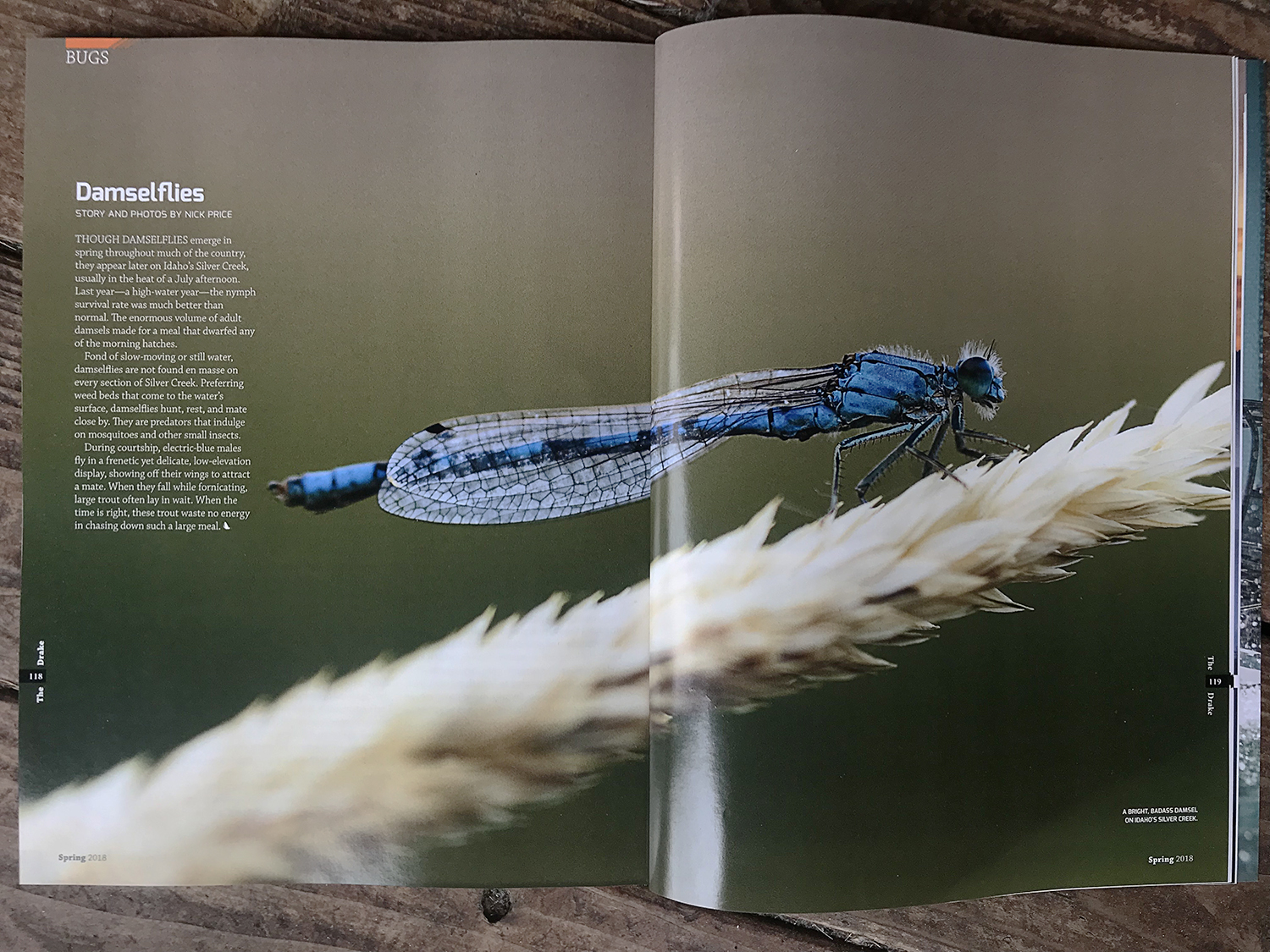 The Drake Magazine feature on Silver Creek Damselflies. Spring 2018