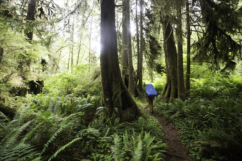 backpacking rainforest.jpg