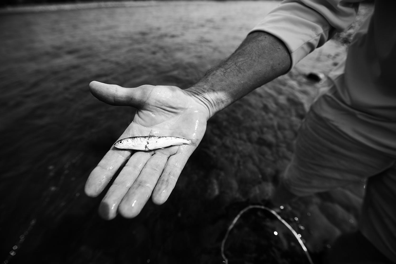 Dan Lahren & Dead Whitefish