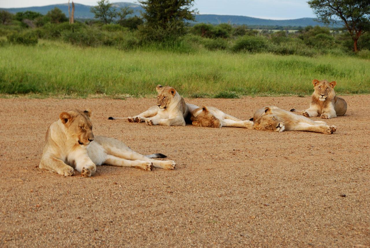 Madikwe, South Africa