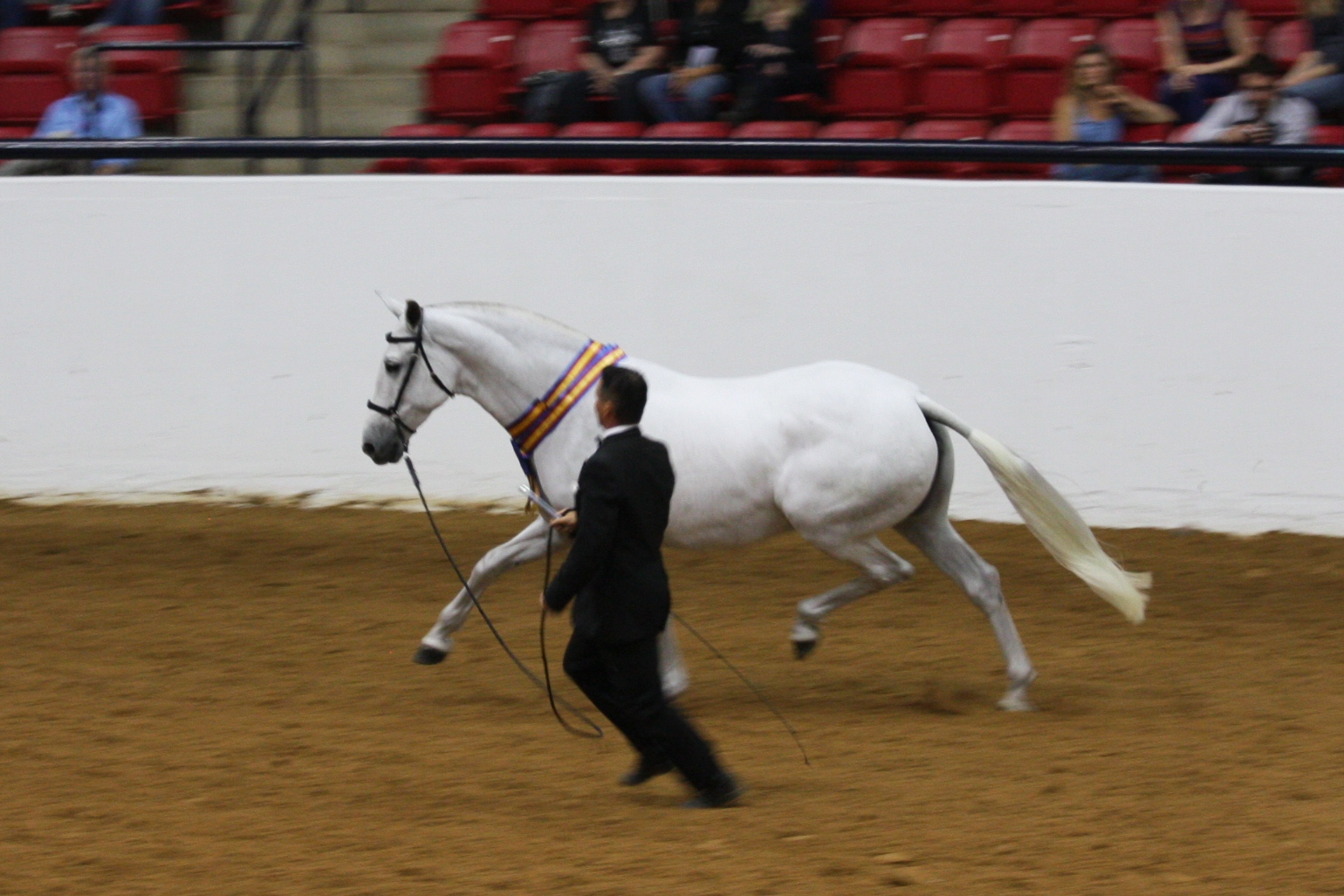 Fantasia Del C & Howard Peet accepting the 2012 Purebred Andalusian of the Year award. Photo: Sarah C. Shechner