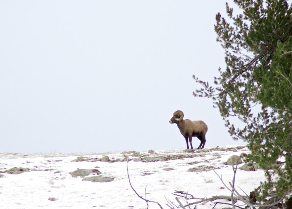 Yellowstone 6.jpg