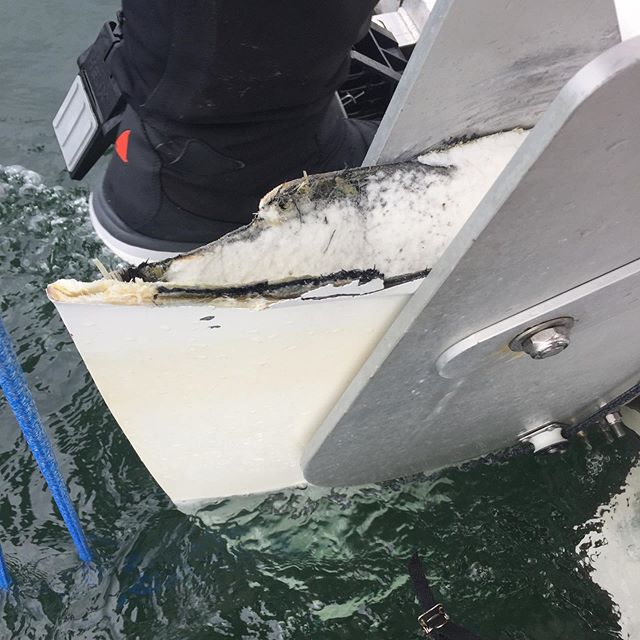We recovered the broken piece of rudder and modified it to fit the cassette to get us to Bella Bella. We feel it would be imprudent to continue like this, so we are investigating both repair and replacement options. @racetoalaska