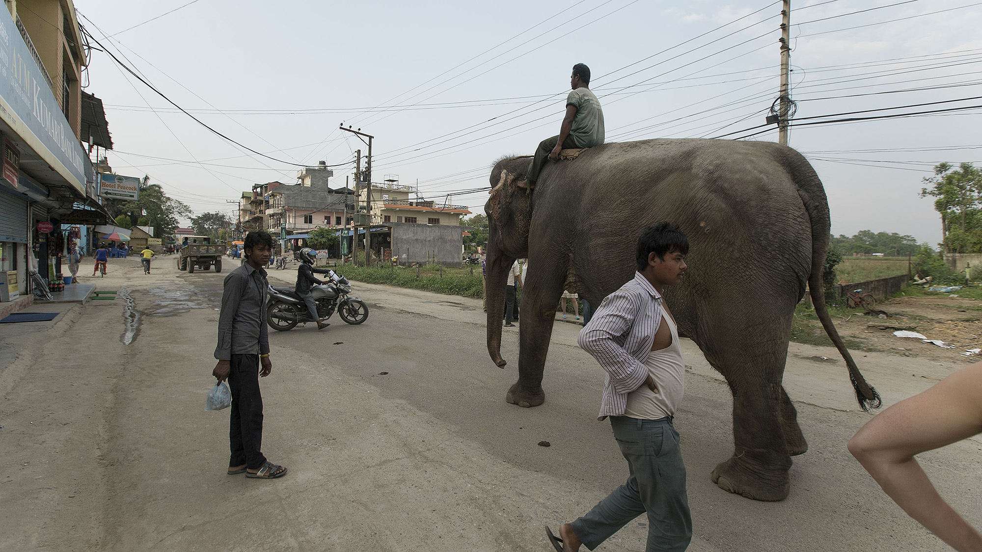Safaris on elephant back are very common in Chitwan National Park.  The tourism industry due to the park has boomed in recent years, providing more money for anti-poaching but encroaching severely on its periphery with human settlements.
