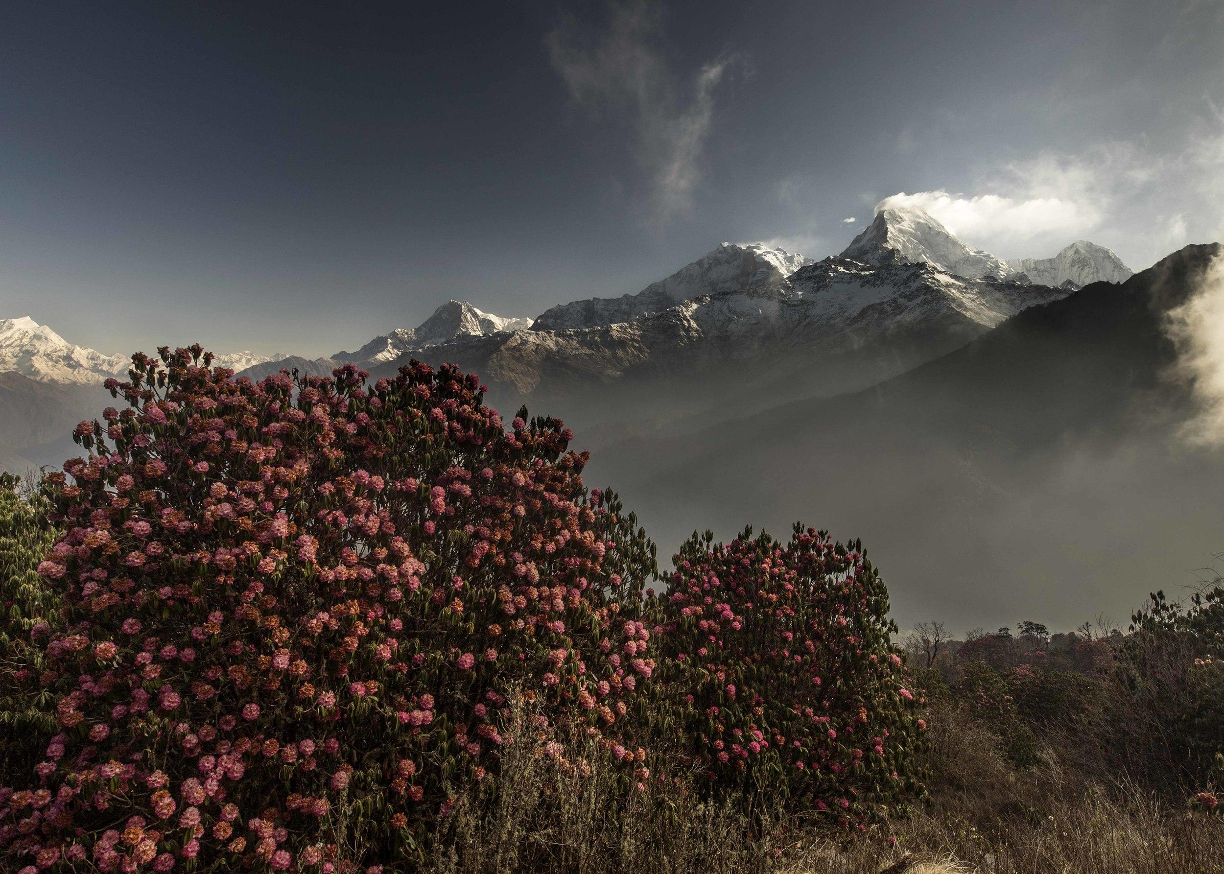 MHood_2015_04_06_AnnapurnaTrek_DSC01762_1.jpg