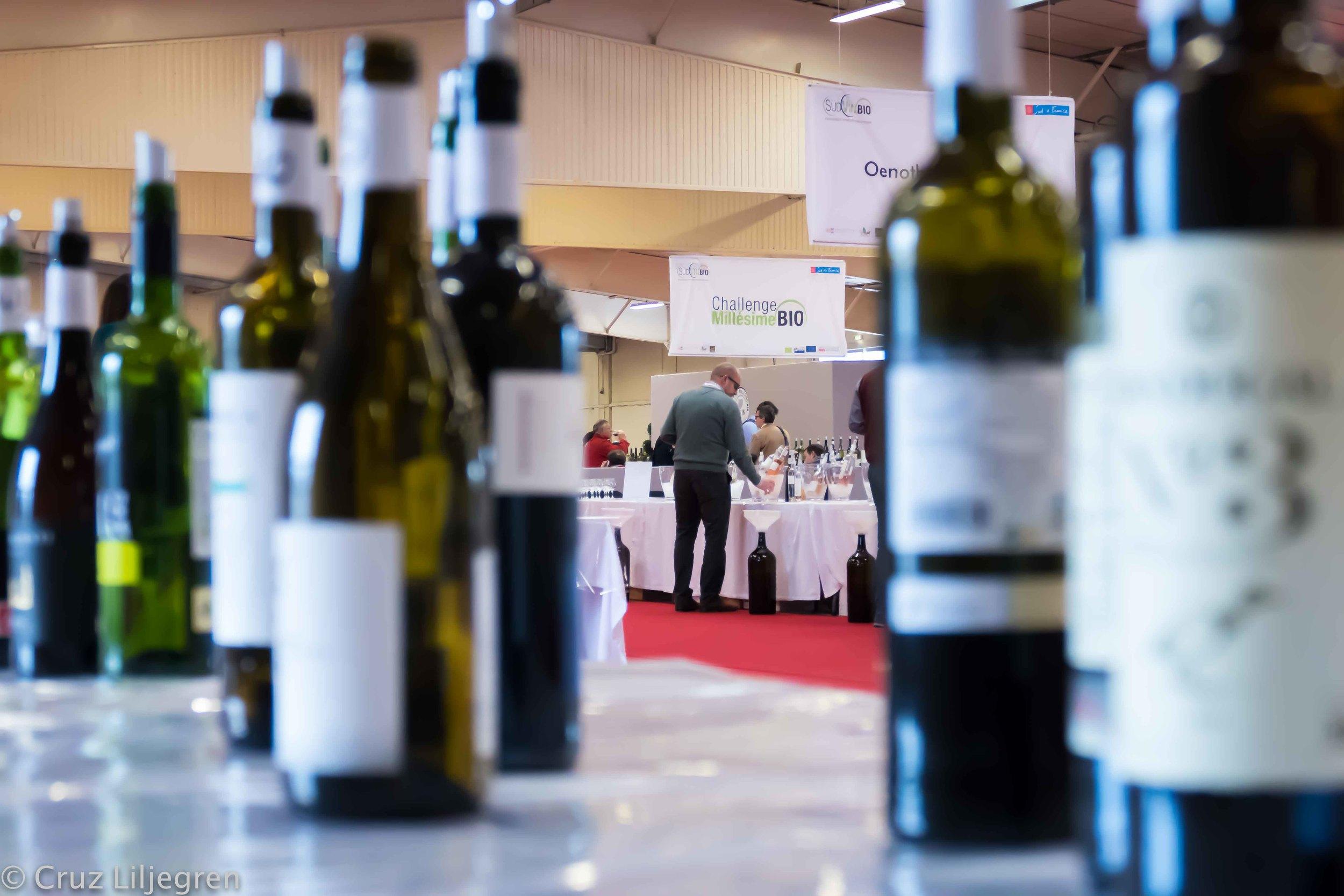 bottles-of-wine.jpg