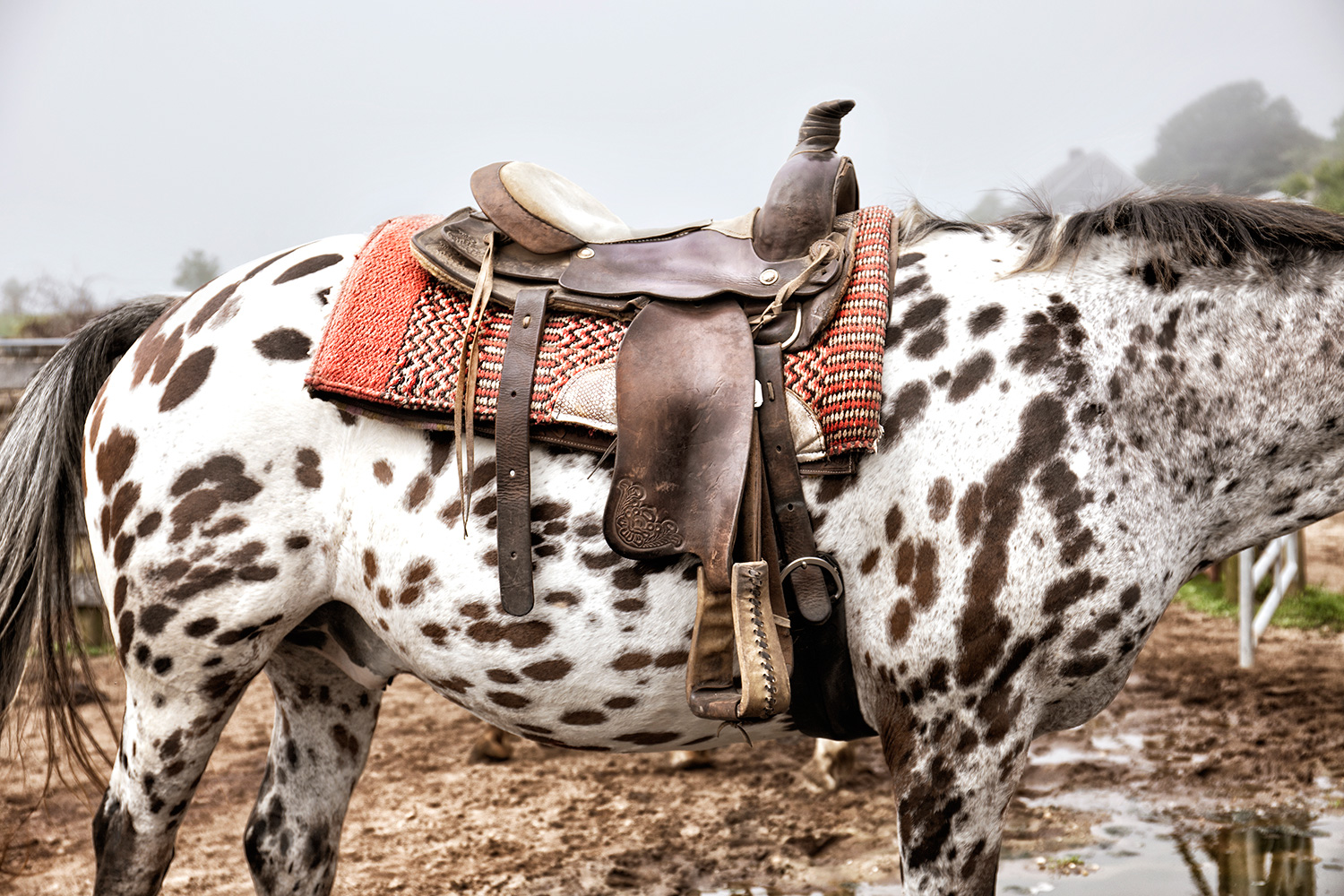 Appaloosa Horse, Deep Hollow Ranch