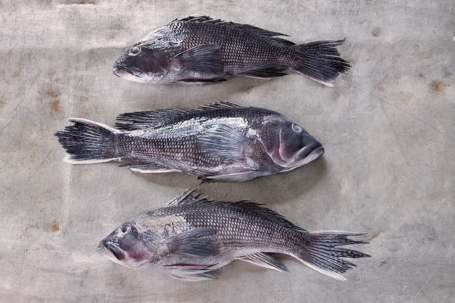 Black Sea Bass, Gosman's Fish Dock