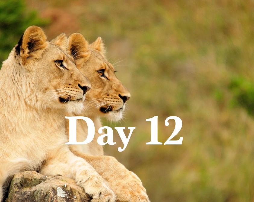 day12.jpg